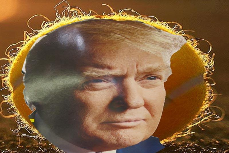 Dear Donald, Fire Away My Friend