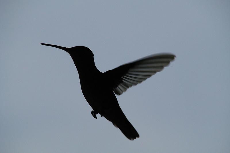 Hummingbird Burial